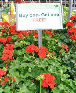 Buy One Get One Annuals