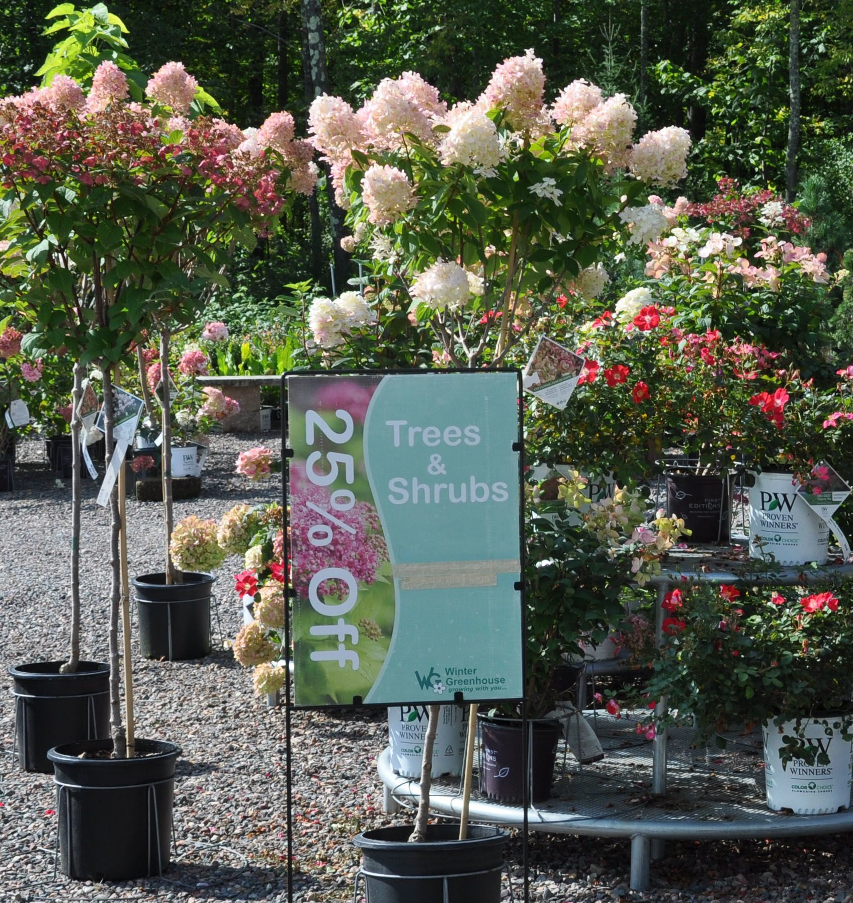 Hydrangea Trees and Roses