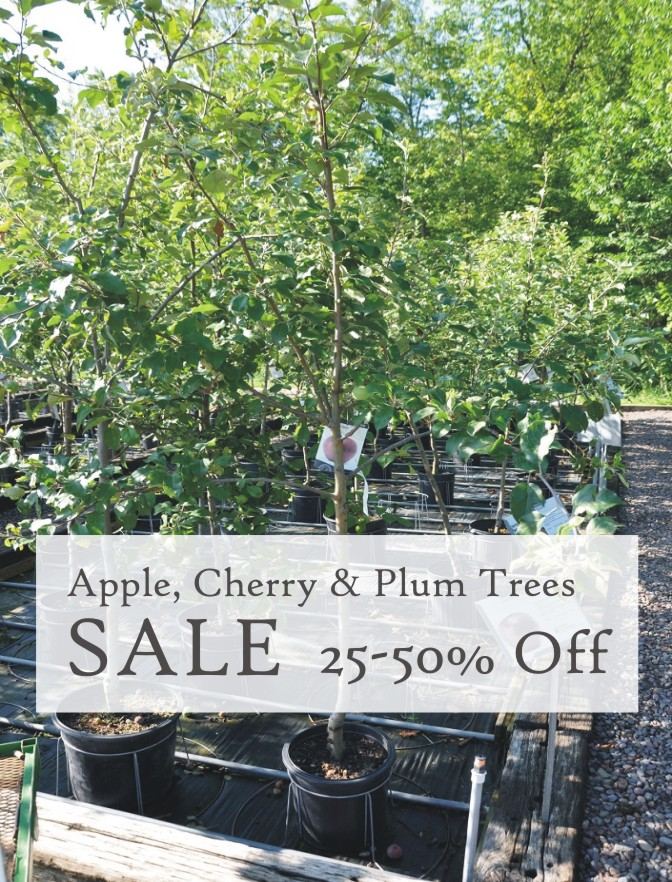 Fruit Tree Sale