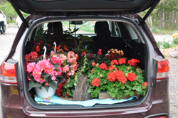 Annuals on Sale