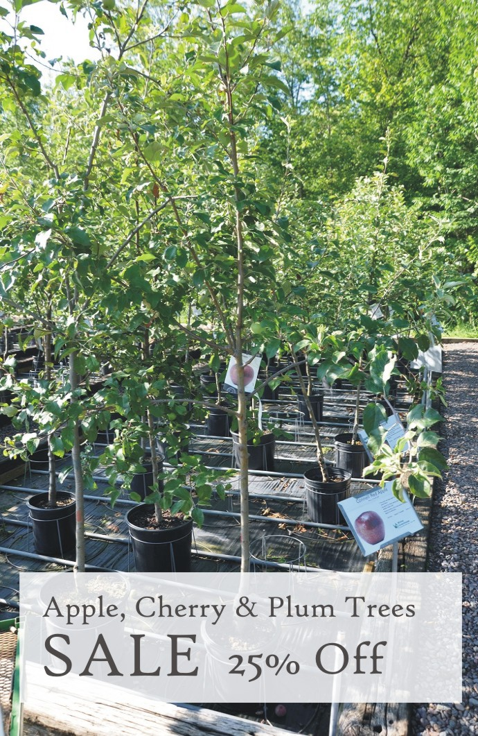 Apple, Cherry, Plum Tree Sale