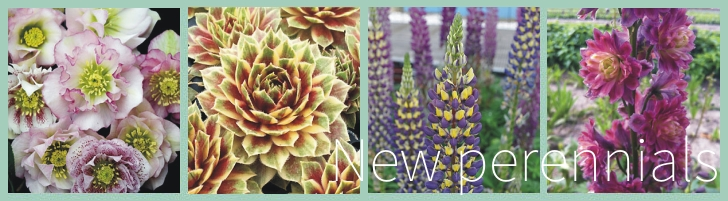 Passionate About Perennials