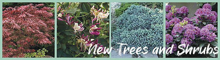 New Trees & Shrubs