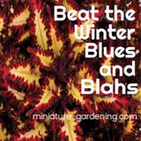 Beat the Winter Blues and Blahs