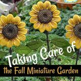 Taking Care of the Fall Miniature Garden