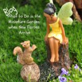 What to Do in the Miniature Garden When New Fairies Arrive