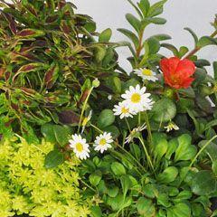 Miniature Trees Plants at miniaturegardeningcom Miniature