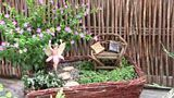 Miniature and Fairy Garden Ideas
